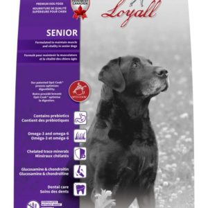 Loyall Senior Dog